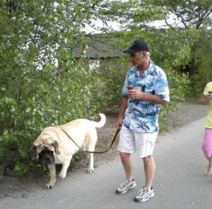 dog, mastiff, with owner