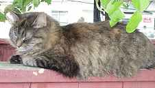 cat dozing on a fence