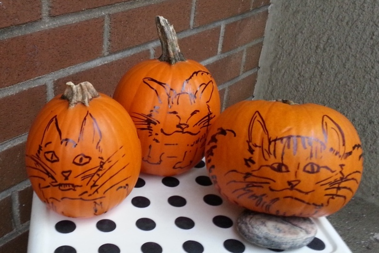 cat-pumpkins-med
