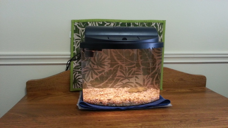 Five-gallon aquarium with gravel