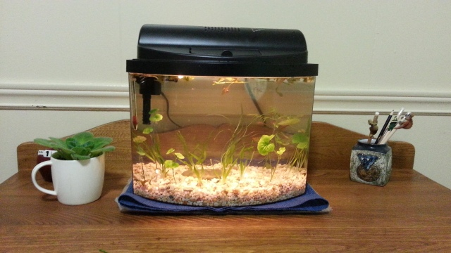 An aquarium with gravel and plants, on a bureau