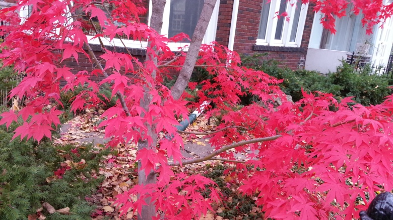 A tree with brilliant red leaves