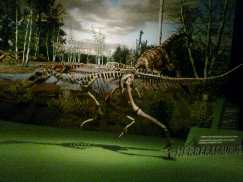 A lightweight, bipedal dinosaur skeleton is poised in a running posture