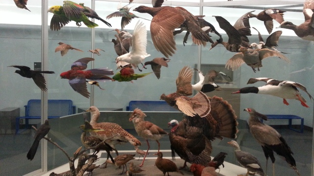 Stuffed birds posed as if flying