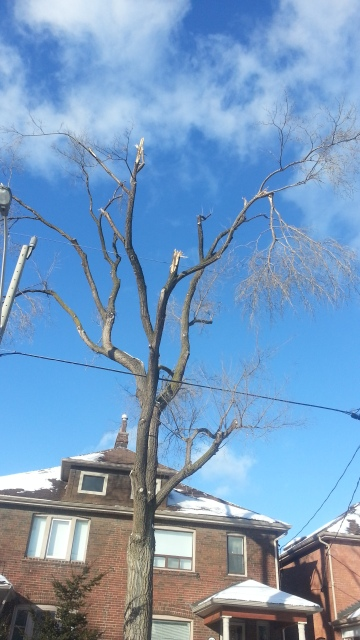 A large tree shows broken branches against a blue sky