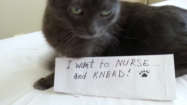 A cat looms over a paper sign: I want to nurse... and knead!