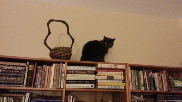 A cat perches on top of a bookshelf. He sits next to a decorative basket.