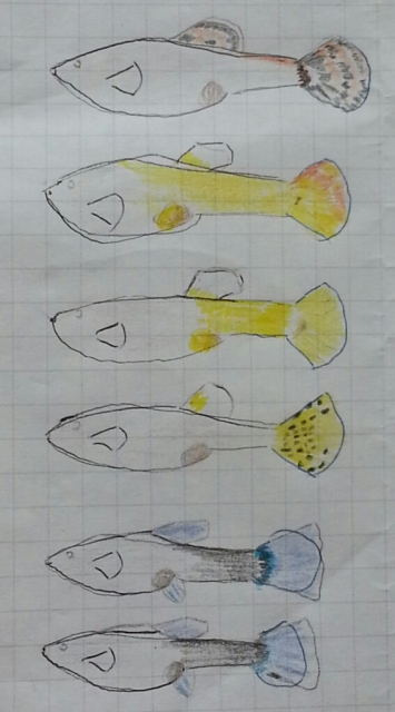 rough outlines of six fish with markings coloured in