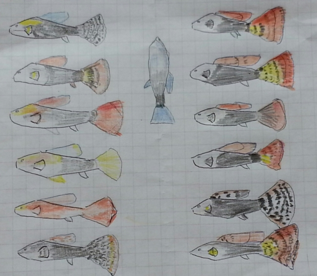Ooutlines of thirteen fish with spots and shading coloured in