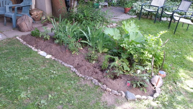 A small garden with rhubarb, irises, and tomato plants, is surrounded by small, decorative stones